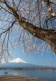 Sakura ανθών κερασιών και fuji βουνών Στοκ εικόνες με δικαίωμα ελεύθερης χρήσης