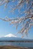 Sakura ανθών κερασιών και fuji βουνών Στοκ εικόνα με δικαίωμα ελεύθερης χρήσης