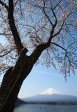Sakura ανθών κερασιών και fuji βουνών Στοκ φωτογραφία με δικαίωμα ελεύθερης χρήσης