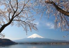 Sakura ανθών κερασιών και fuji βουνών Στοκ Εικόνες