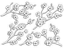 Sakura γραφικό λουλουδιών κλάδων μαύρο απομονωμένο λευκό διάνυσμα απεικόνισης σκίτσων καθορισμένο Στοκ Εικόνες
