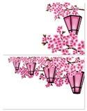 Sakura Δύο εικόνες ένας κλάδος ενός δέντρου κερασιών με τα πορφυρά λουλούδια σε ένα άσπρο υπόβαθρο Μια σειρά καμμένος κήπου απεικόνιση αποθεμάτων