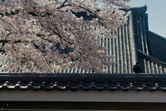Sakura και στέγη Στοκ Εικόνα