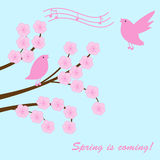 sakura κλάδων Στοκ εικόνες με δικαίωμα ελεύθερης χρήσης