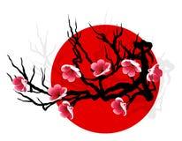 sakura κλάδων Στοκ φωτογραφία με δικαίωμα ελεύθερης χρήσης