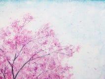 Sakura λουλουδιών ανθών κερασιών Watercolor απεικόνιση αποθεμάτων