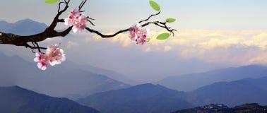 Sakura με το συμπαθητικό υψηλό βουνό Στοκ φωτογραφία με δικαίωμα ελεύθερης χρήσης