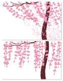 Sakura στον αέρα και στον ήρεμο καιρό Οι κλάδοι με τα ρόδινα λουλούδια και το κεράσι βλαστάνουν, ο κορμός ενός δέντρου Απομονωμέν Στοκ φωτογραφία με δικαίωμα ελεύθερης χρήσης