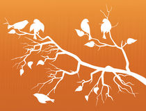 вишня sakura цветения птиц Стоковые Фото