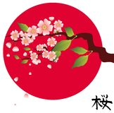 Sakura Royalty Free Stock Image