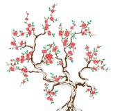 Sakura Royalty-vrije Illustratie