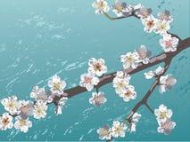 Sakura Imagen de archivo libre de regalías