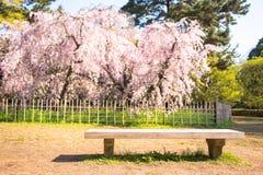Sakura Photo stock