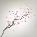 Sakura Photos libres de droits