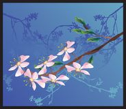Sakura. On a blue background Stock Photo