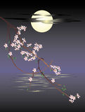 Sakura. On a moon background Royalty Free Stock Images