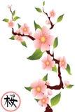 Sakura Stock Foto's