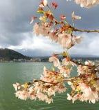 Sakura Imagens de Stock