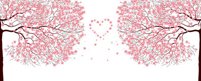 Sakura-Bäume. Stockbild