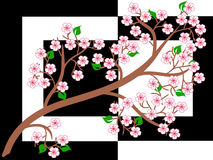 Sakura,background. Figure branches of Japanese sakura trees. There is a vector Stock Photography