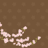 Sakura Background - Brown. Brown and pink flowers sakura tree branch on the ground Stock Images