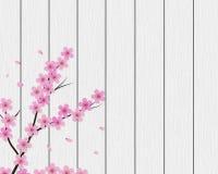 Sakura background with floral tree, wood planks vector illustration