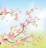 Sakura-Blüte lizenzfreie abbildung