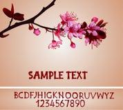 Sakura-Blüten Lizenzfreies Stockfoto