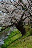 sakura blisko Tokyo obraz stock
