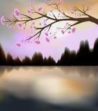 Sakura in bloei Stock Afbeelding