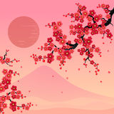 Sakura blommar vektorbakgrund Royaltyfri Fotografi