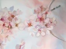 Sakura blommavattenfärg Arkivfoton
