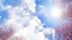 Sakura blommor och fallande kronblad på solljus