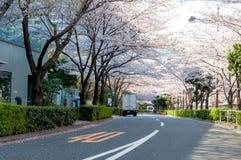 Sakura blomning på ett affärsområde i Tokyo, Japan Arkivfoto