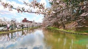 sakura blomninghirosaki hokkaido Royaltyfri Fotografi