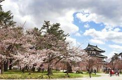 sakura blomninghirosaki hokkaido Arkivfoto