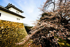 Sakura Bloom in Hikone-jō (Castle) Royalty Free Stock Image