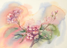Sakura bloom watercolor Royalty Free Stock Image
