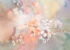 Sakura bloom watercolor Stock Photography