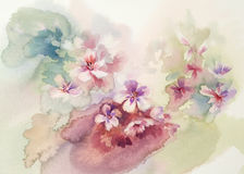 Sakura bloom watercolor Royalty Free Stock Photo