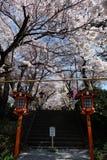 Sakura bloomimg at the entrace of Chureito Pagoda, Japan Stock Photos