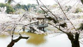 Sakura blooming at Ukimido Pavillion in Sagi-Ike Pond Stock Images