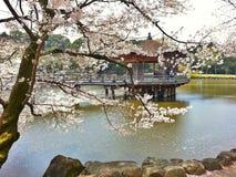 Sakura blooming at Ukimido Pavillion in Sagi-Ike Pond Royalty Free Stock Photography