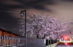 Sakura Blossom Immagini Stock Libere da Diritti