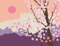 Sakura Blossom Fotografie Stock