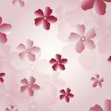 Sakura blossom background Royalty Free Stock Photography