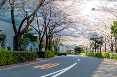 Sakura blossom at a business area in Tokyo, Japan Stock Photo