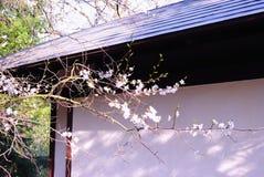 Sakura Blossom en Paviljoen in een Japanse Tuin Stock Afbeeldingen