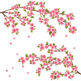 Sakura blossom - Japanese cherry tree. Realistic sakura blossom - Japanese cherry tree with flying petals isolated on white background vector illustration
