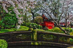 Blossom in a Japanese garden Royalty Free Stock Photos